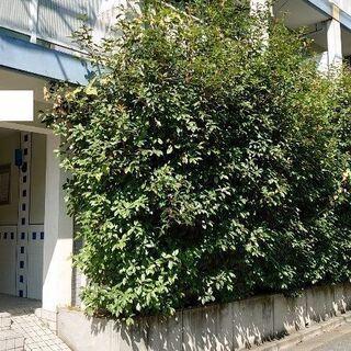 マンション共用部・住居の庭の植栽伐採なら【街の便利屋】へ♫