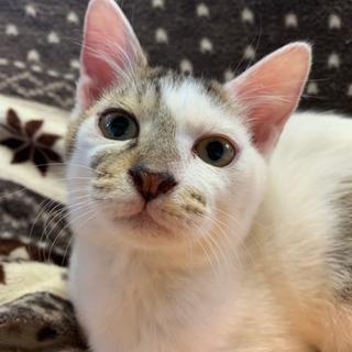 猫の里親探してます🙇♀️急募です。