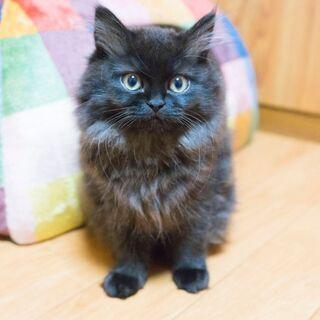 我が家の猫を紹介する動画を撮りたい。
