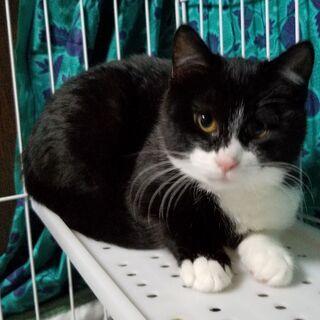 脱走した猫の捜索をお願いします!