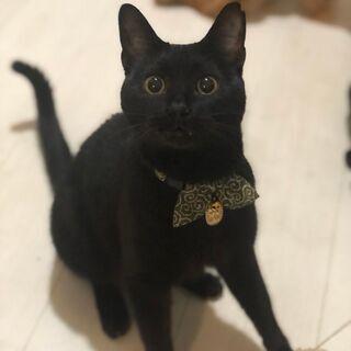 クロネコメンバー募集中! 寄添い系甘えん坊黒猫男子