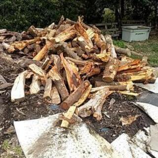 薪 マイカーに積み放題 未乾燥