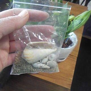 星の砂☆と貝殻 300円