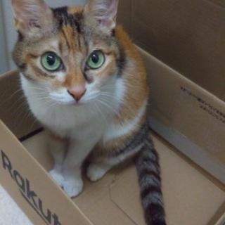 雑種 ミケ 美人 猫 14歳 メス