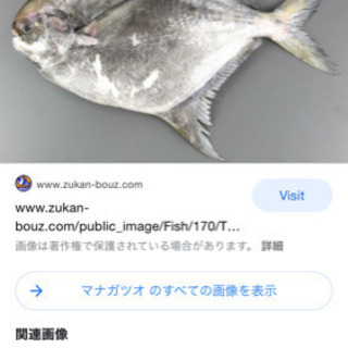 海産物販売します!③100円〜本日高級魚あり!