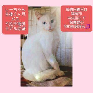 毎週日曜日は福岡市中央区にて保護猫の譲渡会🎵しーちゃん