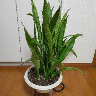 観葉植物 スタンド付き