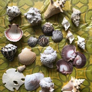 浜辺の綺麗な貝殻