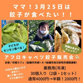 TVで紹介!銚子のアフロキャベツを使った餃子の限定販売会❗️