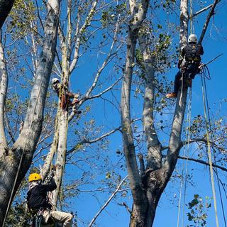ドローン回収!!木にかかったハングライダー・パラグライダーの回収...