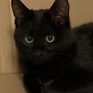 只今、トライアル中 可愛い黒子猫の里親募集