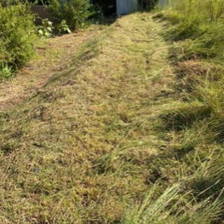 草刈り、剪定いたします