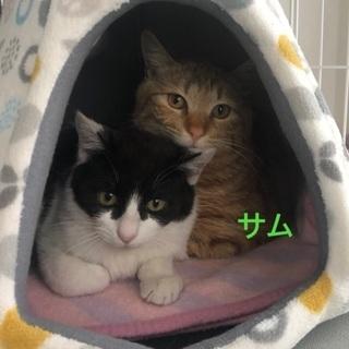 のんびり仲良し兄弟♫ - 猫