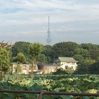 上野公園夜中散歩しませんか