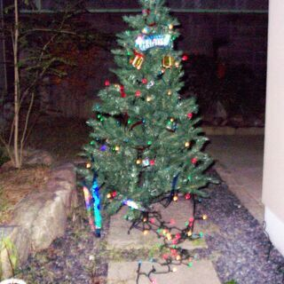 クリスマスツリー&イルミネーション