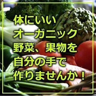 🥭🍐オーガニック貸し農園✨利用料無料です。❗❗5月中旬スタート区...