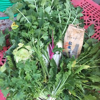 【3/28朝取】無農薬の春野菜8点セット新米1kgとハーブ