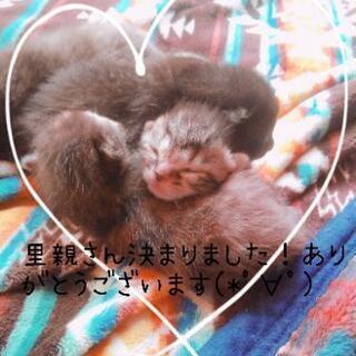 子猫 4匹 【新規受付停止中】
