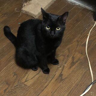 猫を幸せにする会、里親さん募集中です