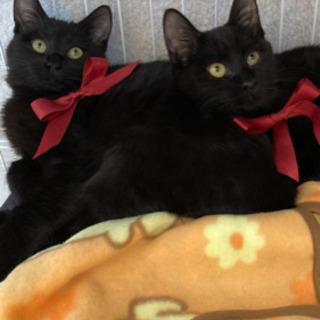 只今、トライアル中です 甘えん坊の黒子猫の里親募集