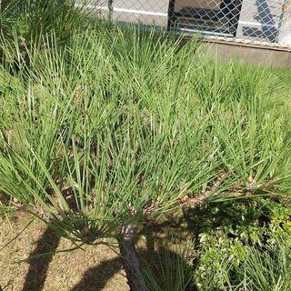 富山県でお庭の手入れ(剪定、害虫駆除、伐採、草刈り)などはお任せ...