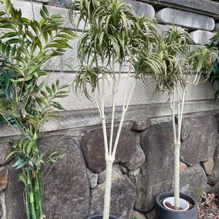 中古観葉植物造花譲ります。