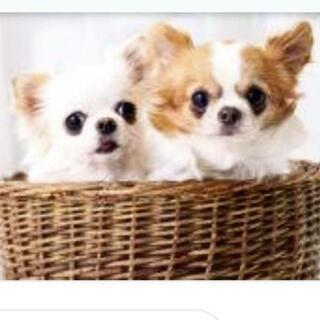 ペット友掲示板メンバーを求む♡【犬友募集】