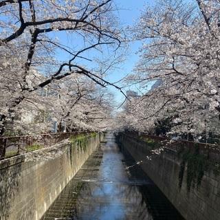 【未経験大募集‼️】新宿、渋谷でのコールセンター業務‼️