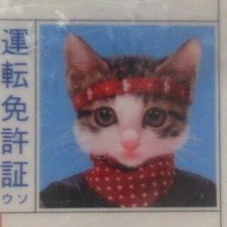 なめんなよ 又吉 運転免許証 野良猫公安委員会 昭和56年09月...