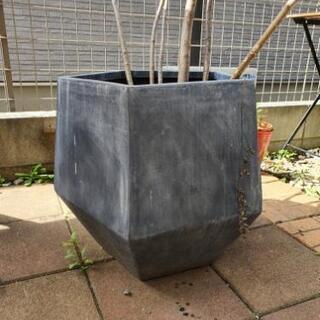 五角形型 植木鉢
