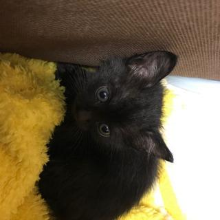 ※一旦募集を中止します。黒猫の女の子、大人しくて可愛いですよー