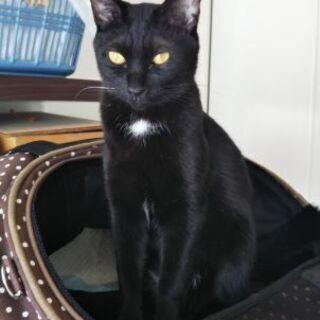 背乗り膝乗り大好き甘えん坊の黒猫女子
