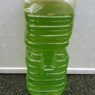 メダカの飼育水 2リットル ①グリンウォーター