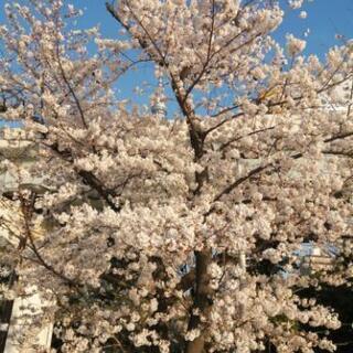 浅草、蔵前、田原町、両国、浅草橋、上野、秋葉原辺りで散歩の画像