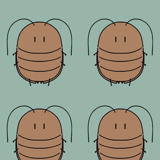 デュビア幼虫Mサイズ33匹〜