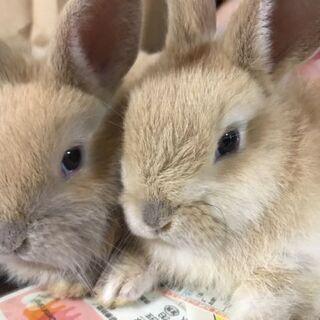 可愛いウサギちゃんです。