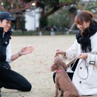 公認ドッグトレーナー直伝!愛犬のしつけ方、飼い方を優しくお伝えします!