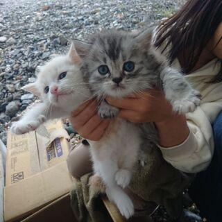 更新します。白猫 赤ちゃん 飼い主不在を確認済み