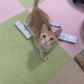 生後5ヶ月〜6ヶ月の兄弟猫ちゃん