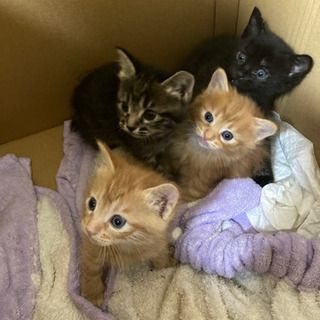 子猫4匹の画像