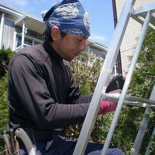 植木の剪定や刈込、草刈り、伐採などお庭のお手入れ承ります!