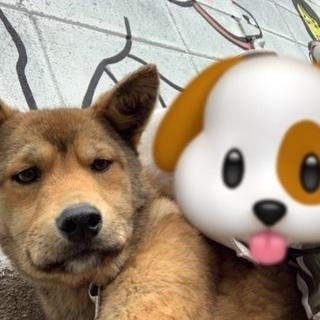 引き続き岡山市保健所から募集します - 犬