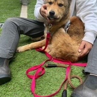 緊急岡山市保健所収容犬4月13日17時