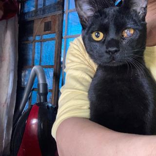 黒猫仮名小結くん