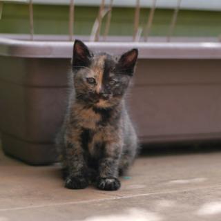 生後2ヶ月の野良子猫