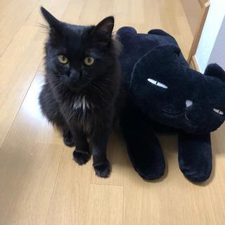 黒猫のオス