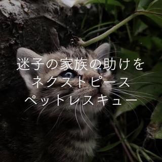 【迷い猫探偵、猫探しプロ】ペットレスキュー、ペット探偵、兵庫・大...