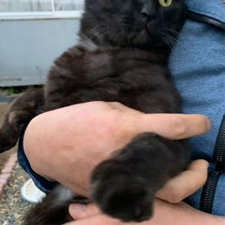 人馴れ抜群な黒猫