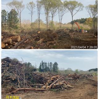 森林伐採 竹林伐採抜根 造成工事ならツチヤガーデンホーム/所沢市...