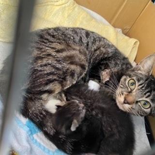 生後1ヶ月の仔猫 3匹 引取りに来てくださる方限定の画像